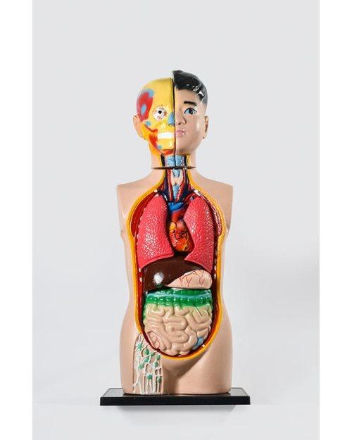 БМ022 - Човечко тело - торзо 85 см.