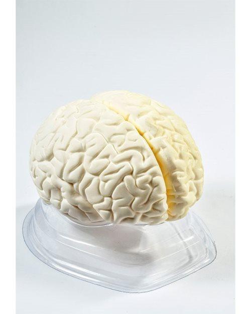 БМ008 - Голем мозок