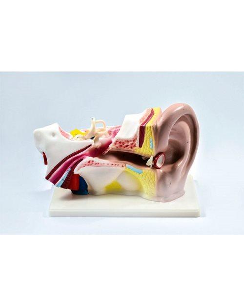 БМ015 - Пресек на уво