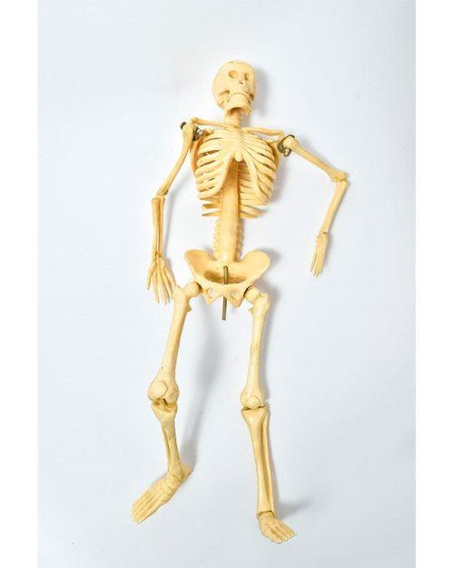 БМ003 - Скелет 42 см.