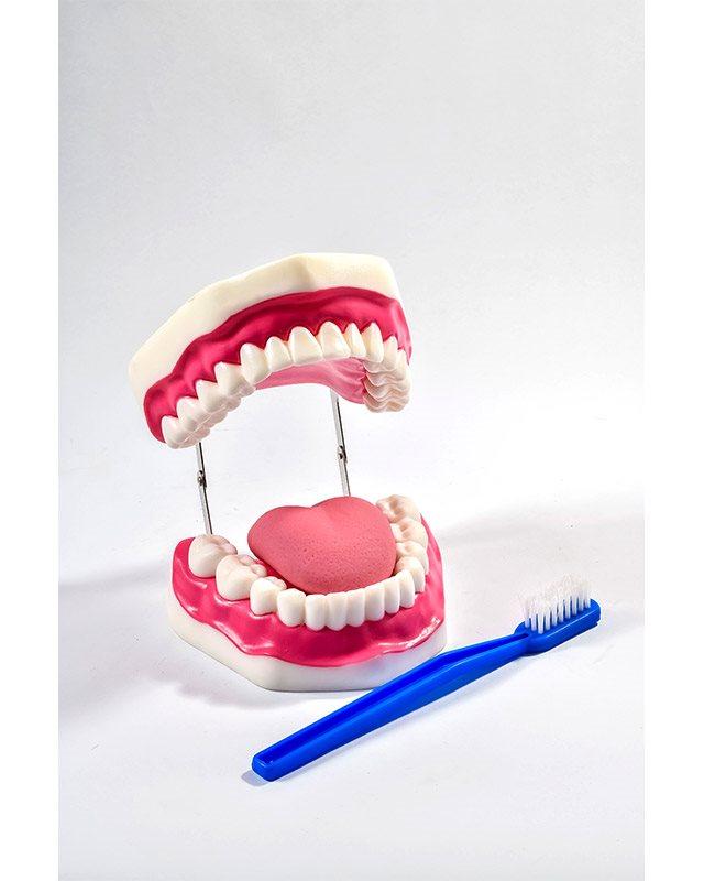 БМ016 - Вилица со заби и непца