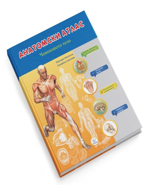 Анатомски атлас човеково тело - 8097